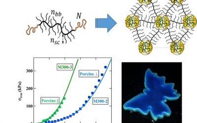 Comment programmer le comportement mécanique et la coloration à partir de la structure moléculaire des polymères?